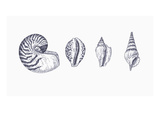 Illustration of Mollusk Shells Giclee Print by Christina Brodie