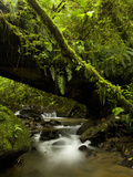 Cloud Forest Stream in Juan Castro Blanco National Park, Costa Rica Photographic Print by Gregory Basco