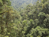 A View of the Rainforest in Podocarpus National Park in Southeast Ecuador Photographic Print by Glenn Bartley