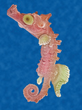 A Seahorse Floating in the Water SEM Photographic Print by Aaron Bell