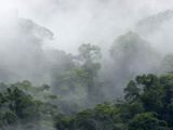Cloud Forest, Barva Volcano National Park, Costa Rica Photographic Print by Gregory Basco