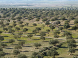 Olive Groves on the Road Between Le Kef and Kairouan, Tunisia Fotodruck von Gary Cook