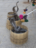 Snake Charmers Baskets Containing Cobras, Jaipur, India Photographic Print by Hal Beral