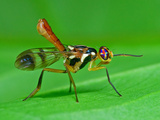 Colorful Fly Photographic Print by Tan Chuan-Yean