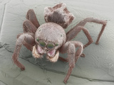 Jumping Spider Showing its Various Sets of Eyes SEM X17 Photographic Print by Aaron Bell