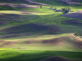 The Palouse Region of Eastern Washington Is a Major Wheat-Producing Agricultural Area Photographic Print by Sean Bagshaw