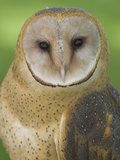 Barn Owl (Tyto Alba) Head, Alberta, Canada Photographic Print by Glenn Bartley