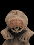 Star-Nosed Mole (Condylura Cristata) Embryo Head, SEM Photographic Print by Ken Catania