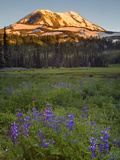 Mt. Adams Wilderness and a Meadow, Washington, USA Photographic Print by David Cobb