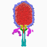 The Inside Half of a Three-Dimensional Reconstruction of Bacteriophage 29 Photographic Print by Timothy Baker