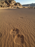 Camel Tracks in the Jebel Acacus, Sahara Desert, Libya Photographic Print by Gary Cook