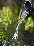 Clean Water from a Mountain Spring Pours from a Pipe, Oregon, USA Photographic Print by Ellen Bishop