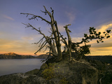 An Old Tree on the Edge of Crater Lake Caldera, Crater Lake National Park at Sunset, Oregon, USA Photographic Print by David Cobb