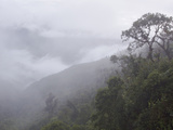 Cloudforest in the Tapichalaca Reserve, Ecuador Fotografie-Druck von Glenn Bartley