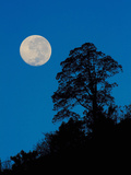 Moon and Tree Photographic Print by Gregory Basco