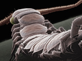 Centipede Showing the Segmented Body and One Pair of Legs Per Segment, SEM Photographic Print by Aaron Bell