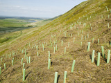 Tree Plantings at the Rspb Reserve at Geltsdale, North Cumbria, United Kingdom Photographic Print by Ashley Cooper