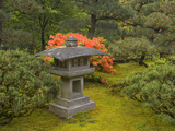 Contemporary Lantern and Azalea, Japanese Garden, Portland, Oregon, USA Photographic Print by David Cobb