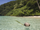 Coconut Floating in Lagoon, Micronesia, Palau Photographic Print by Reinhard Dirscherl