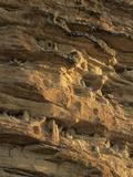 Tombs in the Bandiagara Escarpment, Falaise De Bandiagara, Mali Fotografisk tryk af Gary Cook