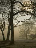 Autumn Mist Photographic Print by Ashley Cooper