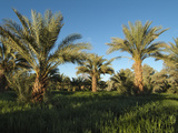 Palm Groves at Tekerkiba, Wadi Al-Hayat, Sahara Desert, Libya Photographic Print by Gary Cook