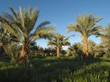Palm Groves at Tekerkiba, Wadi Al-Hayat, Sahara Desert, Libya Photographic Print by Gary Cook