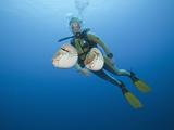 Diver and Two Chambered Nautilus (Nautilus Belauensis), Micronesia, Palau Photographic Print by Reinhard Dirscherl