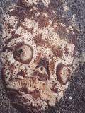 Close-Up View of a Whitemargin Stargazer, Uranoscopus Sulphureus Photographic Print by Hal Beral