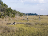 Marsh Ecotone and Intertidal Salt Marsh with Smooth Cordgrass Photographic Print by Marc Epstein