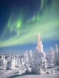 Aurora Borealis or Northern Lights over a Snow-Loaded Boreal Taigforest of Black Spruce Trees Photographic Print by Patrick Endres