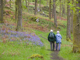 An Elderly Couple Walking Through a Bluebell Wood on the Shores of Coniston Water, United Kingdom Photographic Print by Ashley Cooper