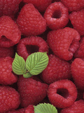 A Harvest of Raspberries Lámina fotográfica por Wally Eberhart