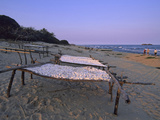 Cassava Drying in the Sun on the Shore of Lake Malawi, Malawi Fotografisk tryk af Gary Cook