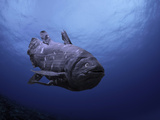 Digital Illustration of Coelacanth That Was Believed to Have Become Extinct Photographic Print by David Fleetham