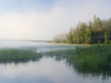 Lake Itaska, the Headwaters of the Mississippi River, Itaska State Park, Minnesota, USA Photographic Print by Clint Farlinger
