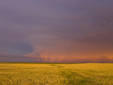 Approaching Storm Near Sunset over Montana, USA Wheat Fields Photographic Print by Charles Doswell