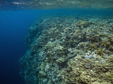 Reef Top with Hard Corals (Acropora) Elphinestone Reef, Red Sea, Egypt Photographic Print by Reinhard Dirscherl