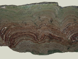 Composite Stromatolites from the Snowslip Formation in Glacier National Park Photographic Print by Gerald & Buff Corsi