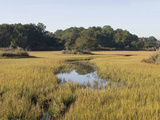 Smooth Cordgrass Photographic Print by Marc Epstein