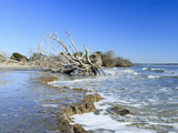 Shore of Otter Island with Driftwood and Dead Vegetation, a Barrier Island Photographic Print by Marc Epstein