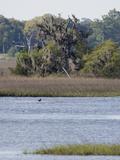 Smooth Cordgrass (Spartina Alterniflora) Tidal Salt Marshes, Stono River, Charleston Fotografie-Druck von Marc Epstein