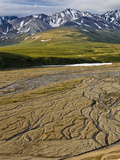The Braided East Fork of the Toklat River, Denali National Park, Alaska, USA Photographic Print by Patrick Endres