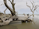 Drift Wood Along the Eroding Shoreline and Beaches, Cape Romain National Wildlife Refuge Photographic Print by Marc Epstein