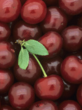 A Harvest of Sweet Cherries, an Excellent Antioxidant Food Photographic Print by Wally Eberhart