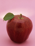 Delicious Apple (Malus) Photographic Print by Wally Eberhart