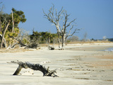 Sandy Shore of Otter Island with Driftwood and Dead Vegetation, a Barrier Island Photographic Print by Marc Epstein