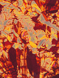 Vitamin C (Ascorbic Acid) Crystals, Polarized LM X80 Photographic Print by Thomas Deerinck