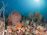 Coral Reef, Raja Ampat, West Papua, Indonesia Photographic Print by Reinhard Dirscherl