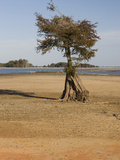Dry Lake Bed of Lake Marion in the Santee Cooper Lake System During the Fall Drought of 2009 Photographic Print by Marc Epstein